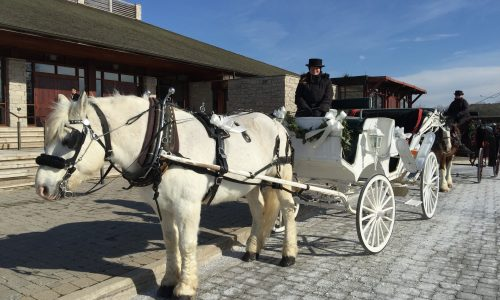 Horse & Carriage Tours