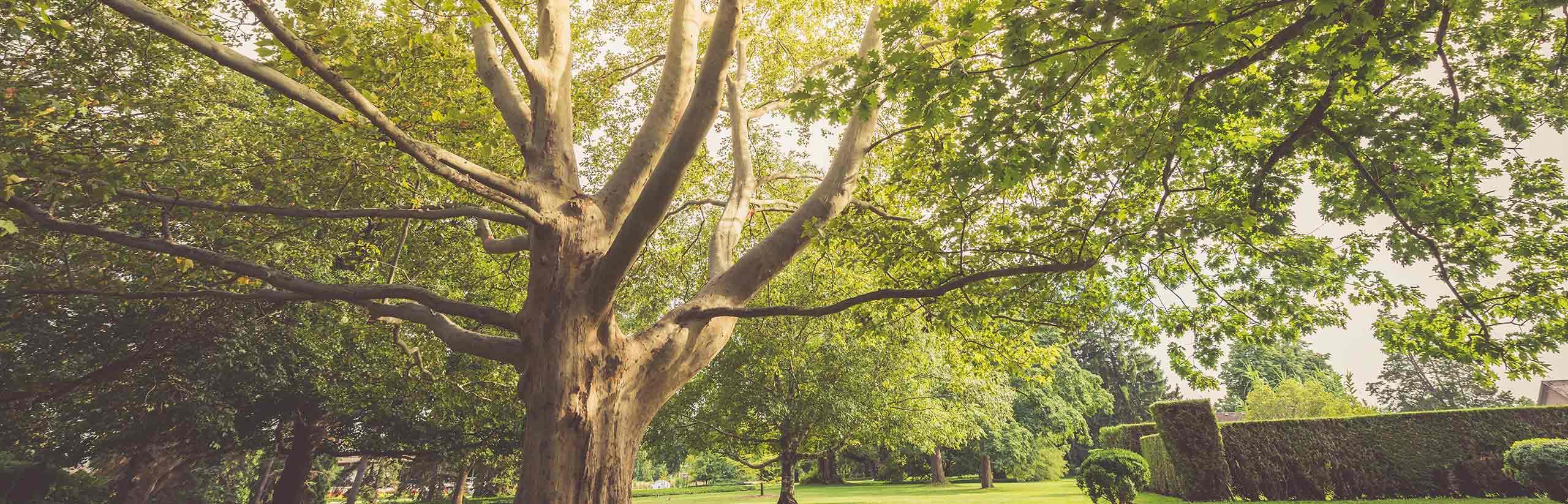Niagara Parks Closes Remaining Outdoor Recreational Amenities