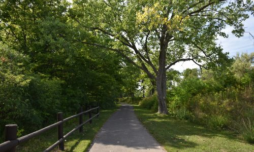 Memorial Tree & Bench Program