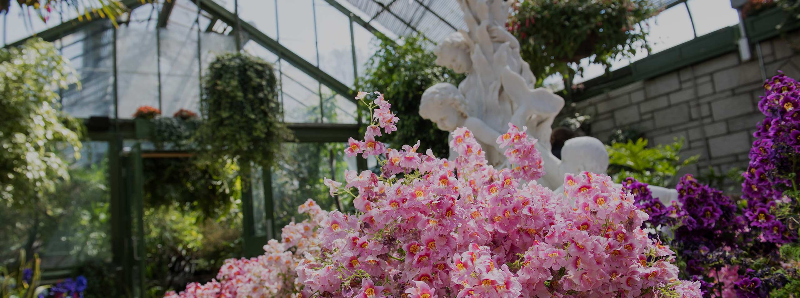 Escape to a Tropical Paradise with the Annual Spring Display