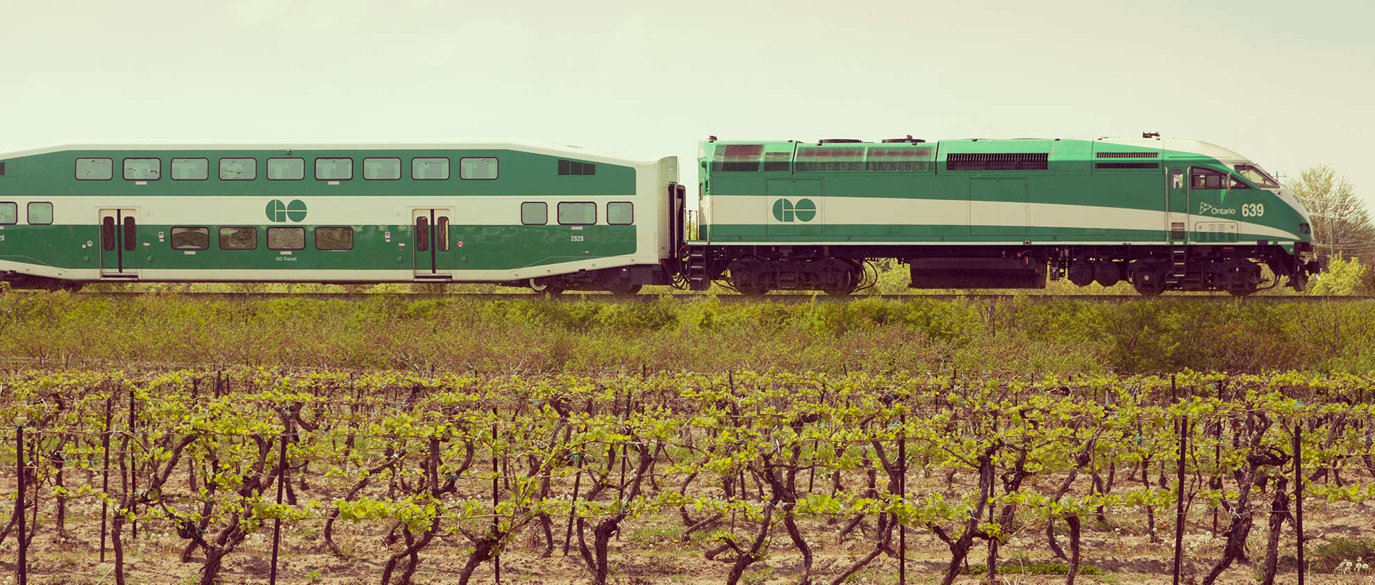 Go Train travelling through vineyards