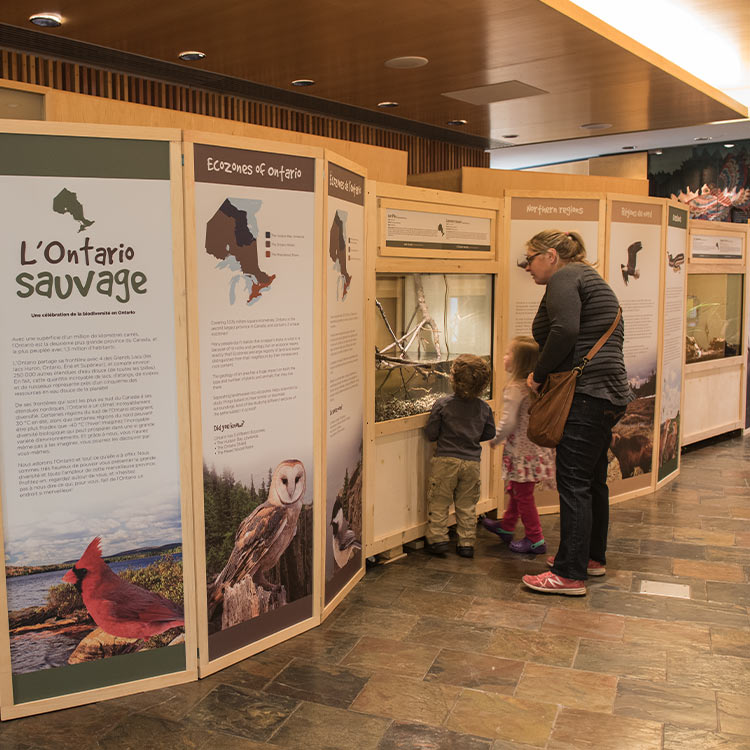 Visitors looking at an exhibit
