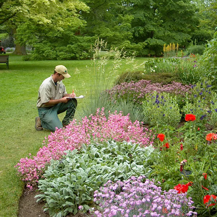 Student kneeling near a garden bed