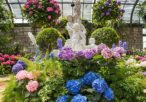 purple and blue Chrysanthemums