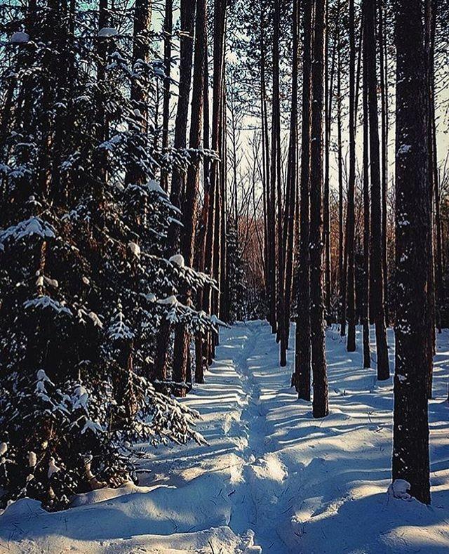 Walking in a winter wonderland 🌲❄️ Photo: @__o__e__j__  #NiagaraPark