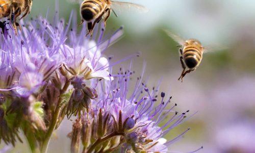 Pollinator Garden Route