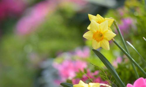 Annual Floral Displays
