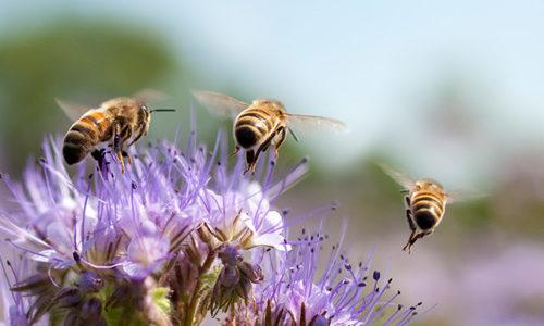 Route de jardin pollinisateur