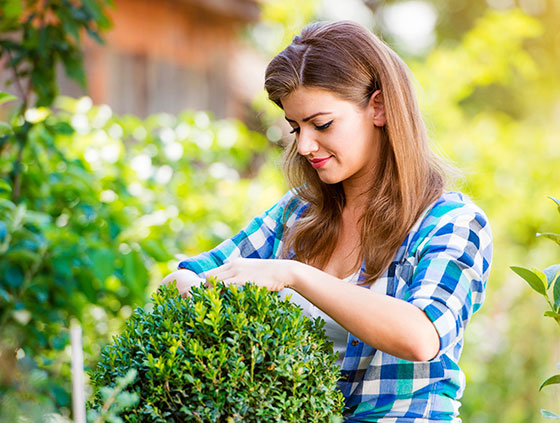 Preserving the Garden