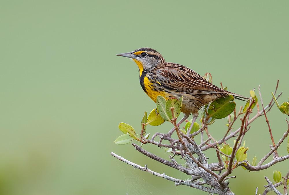 Birding Open House at the Niagara Glen Nature Centre