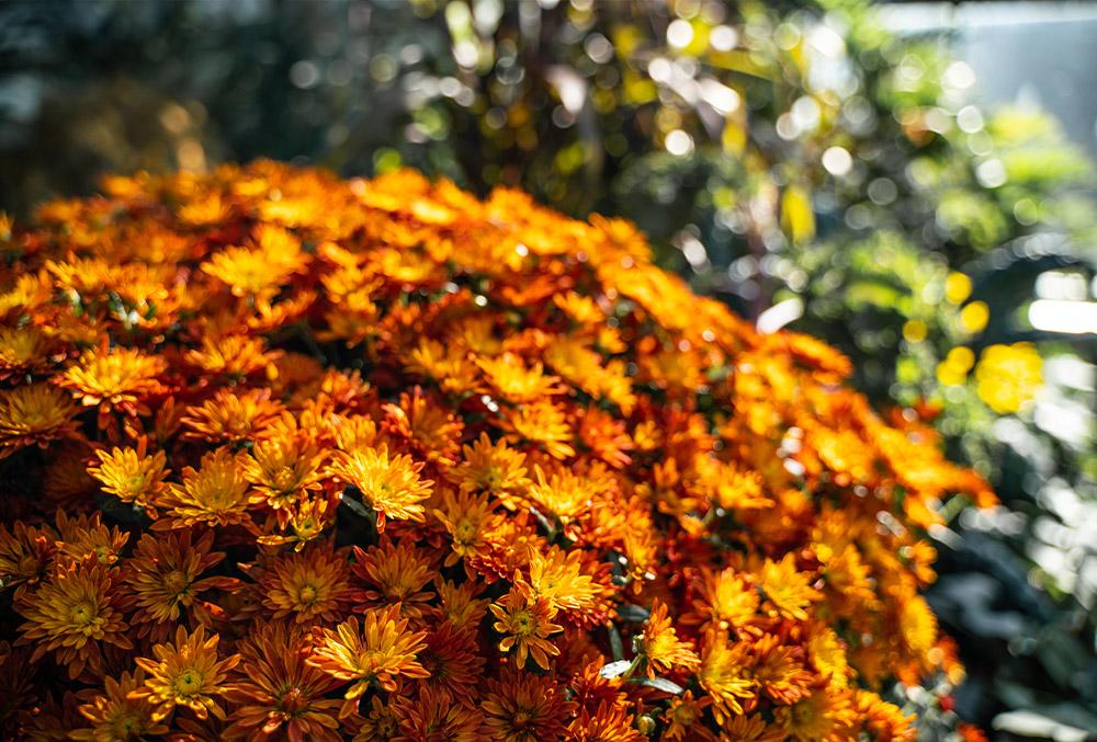 Autumn bloomers