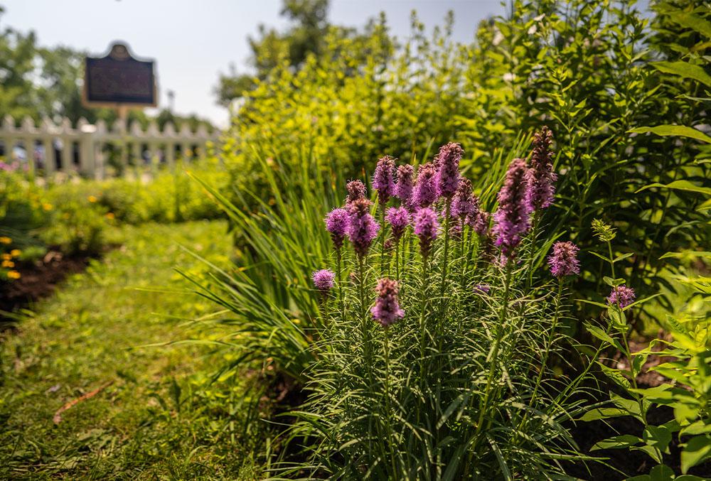The Garden Club of Niagara